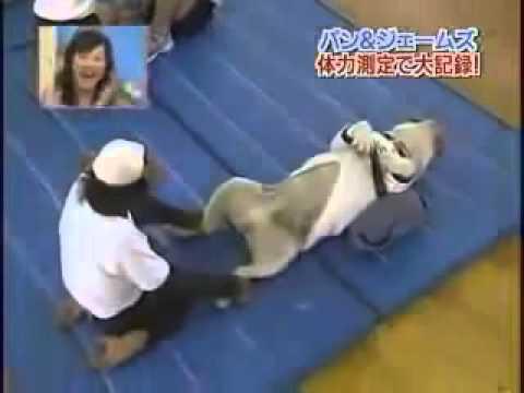 Khỉ và chó tập thể dục - Cười đau bụng