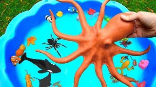 Learn Sea Animal and Wild Zoo Animals Names Learn Colors Video Toys For Kids