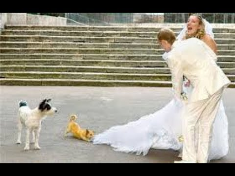 funny videos of wedding fails or ultimate wedding fails