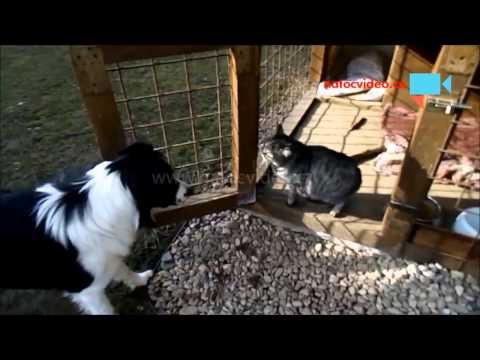 Okupace psí boudy