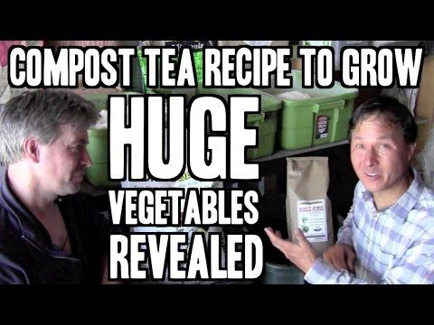 how to grow tea