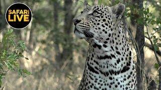 safariLIVE - Sunrise Safari - June 10, 2019