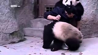 Pandalar İlaç İçmemeye Çalıştı Ama Kurtulamadı