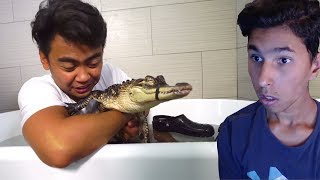 Video IL PREND SON BAIN AVEC DES ALLIGATORS ! MP3, 3GP, MP4, WEBM, AVI, FLV November 2017