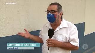 Dengue : com 718 casos, Marília enfrenta epidemia da doença