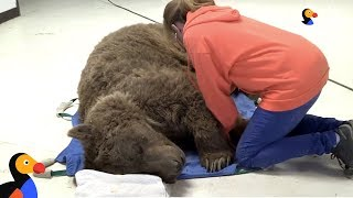 LIVE: Grizzly Bear Gets Medical Exam at Wild Animal Sanctuary | The Dodo LIVE by The Dodo