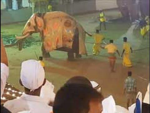 Elephant attacked in rathnapura saman perahera
