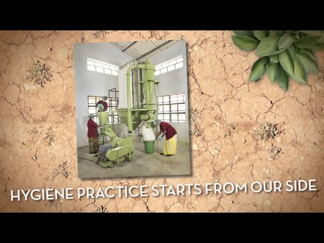 Genius herbs bulk manufacturers of moringa from indi
