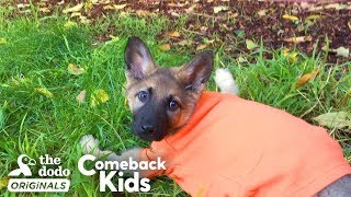 German Shepherd Puppy With Swimmer's Syndrome Teaches Herself To Run   The Dodo Comeback Kids by The Dodo