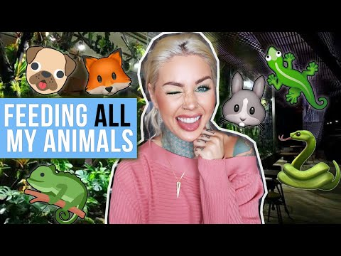 Feeding ALL My Pets in One Video 🍽| KristenLeannimal