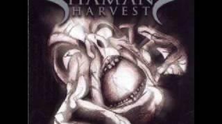 Turn It Up Shaman's Harvest