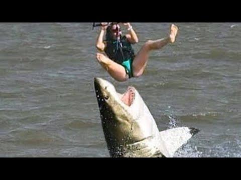 15 Most Dangerous Ultimate Close Calls In the Sea