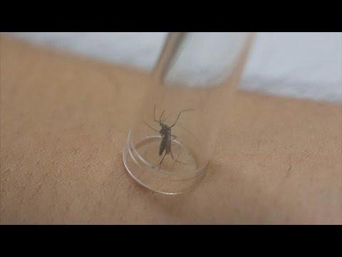 Όλα όσα θέλετε να ξέρετε για τον ιό Ζίκα – science