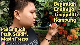 Video Pulang Kampung Genk, Panen Buah Di Kampung Labanan Makarti, Berau MP3, 3GP, MP4, WEBM, AVI, FLV November 2018
