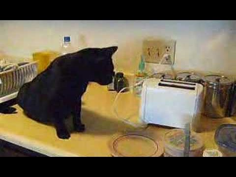 Chats drôles vs Toasters - Chats Tu penses Toaster Compilation 2015 [NOUVEAU HD VIDEO]