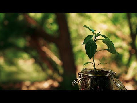 HE SEED - Inspirational Short Film - Christian Motivation for Effective Faith
