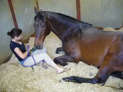 Video Girl and Horse - Great Bond download in MP3, 3GP, MP4, WEBM, AVI, FLV January 2017