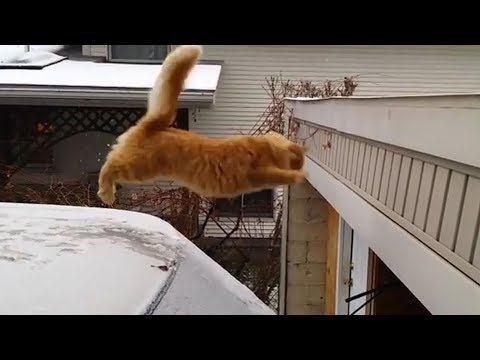 Funny Cats Jump Fail Compilation