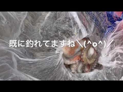 【タコブームの予感♬】南芦屋浜リアルタイム