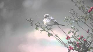 Video Spurn Masked Shrike MP3, 3GP, MP4, WEBM, AVI, FLV Agustus 2018