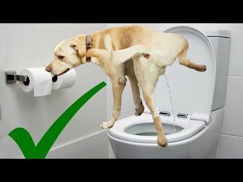 ذكاء الكلاب في الحمامات - حيوانات ذكية ومضحكة