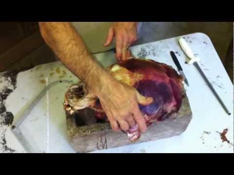 Testa's Taxidermy Tip's – Measuring a Bear Skull