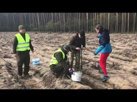 Wideo1: Leszczyniacy sadzą las