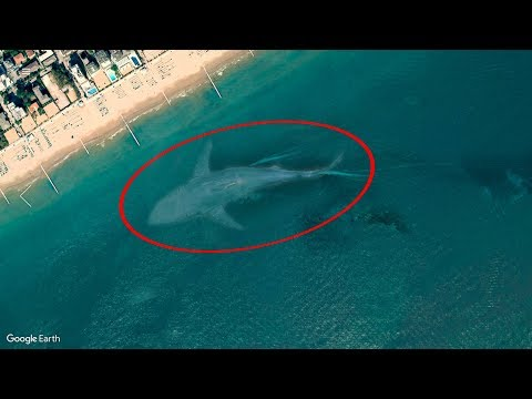 Video 7 Mysterious Deep Sea Creatures Spotted On Google Earth #2 download in MP3, 3GP, MP4, WEBM, AVI, FLV January 2017