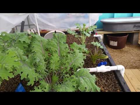 How to Change from Aquaponics to Hydroponics in 2 minutes