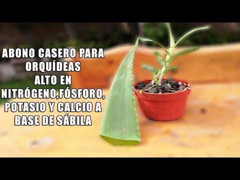 Videos caseros - Abono Casero Alto en NPK a base de SABILA para Orquídeas  Orquiplanet