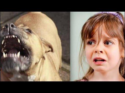 العرب اليوم - كلب يرافق طفلة طيلة 5 أعوام