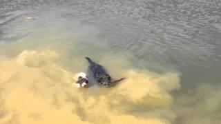 Nikita už umí plavat :-)