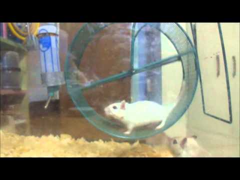 Gerbils: A Cat Entertainment Video