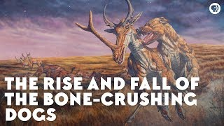 Video The Rise and Fall of the Bone-Crushing Dogs MP3, 3GP, MP4, WEBM, AVI, FLV Maret 2019