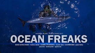 porto santo, beard motion, ocean freaks, madeira island, diving, ocean