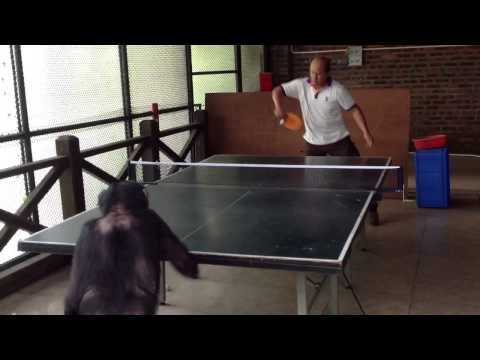 Monkey Plays Ping Pong Like a Pro