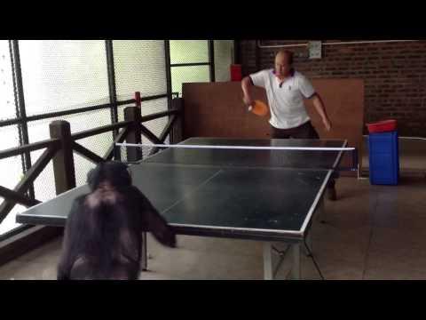 Monkey Plays Ping Pong Like a Pro