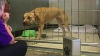 Hond met trauma leeft op door kind