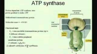 Mod-01 Lec-20 Electron Transport Chain&Oxidative Phosphorylation