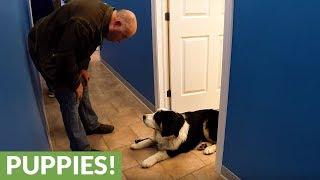 Zabiera psa na wizytę do weterynarza! Zachowanie zwierzaka zaszokowało cały personel!