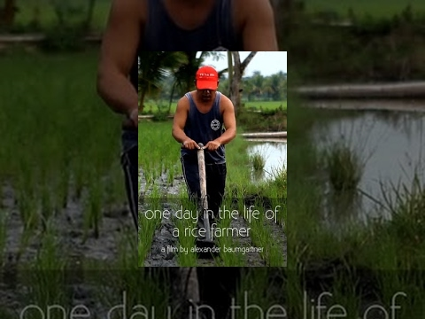 Philippines - For many, a bowl of rice is a simple trip to the supermarket. Rarely do we think about the production of our food. The documentary shows a typical day in the life of a rice farmer and the laborious...