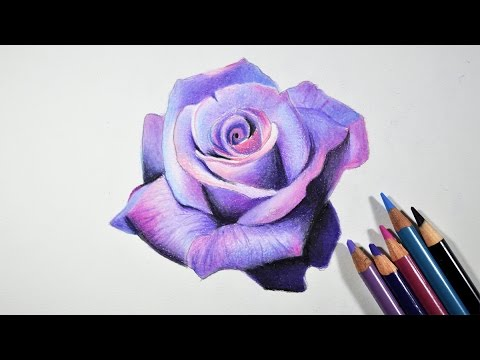 Lavender Rose Flower Drawing Tutorial by fadil
