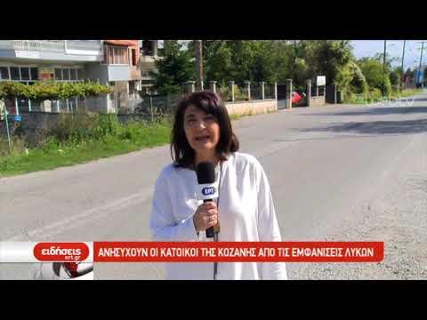 Ανησυχούν οι κάτοικοι της Κοζάνης από τις εμφανίσεις λύκων | 12/10/2019 | ΕΡΤ