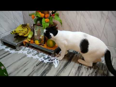 Dil Ghat Bharte Cute Cat Playing And Enjoying
