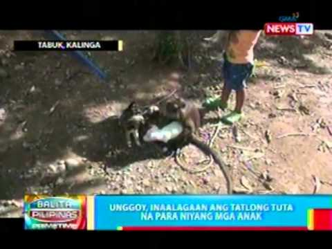 Philippines Monkey Adopts Puppies picture