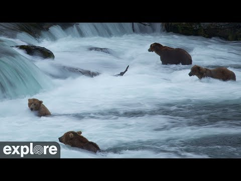 Live-Cam: Braunbären - Katmai National Park - Alaska (U ...