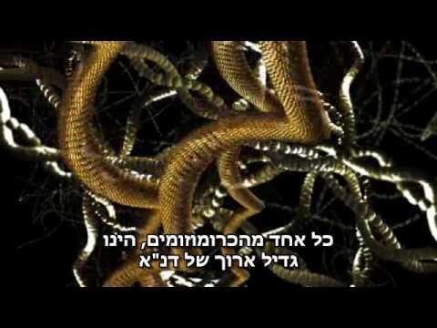 Chromosomen (hebräischer Untertitel)
