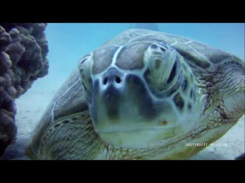 Red Sea Diving Safari Marsa Shagra eco-village  feb  2017_Merülő helyek. Heti legjobbak