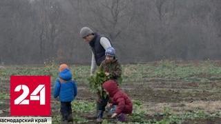 """Президент и """"Россельхозбанк"""" пообещали поддержку аграриям"""