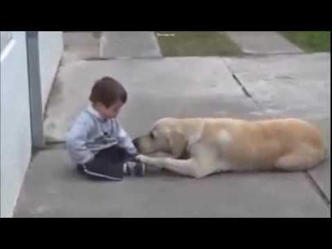 Rencontre émouvante entre un enfant trisomique et un labrador ,…vraiment touchant !